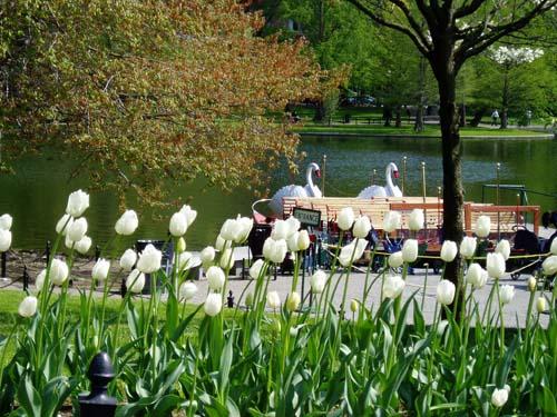 Source: http://commons.wikimedia.org/wiki/File:Boston_Public_Garden.JPG#filehistory